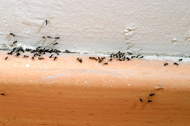 Ants infestation in the house. Need to call pest control.