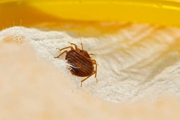 bed bug exterminator lakewood nj
