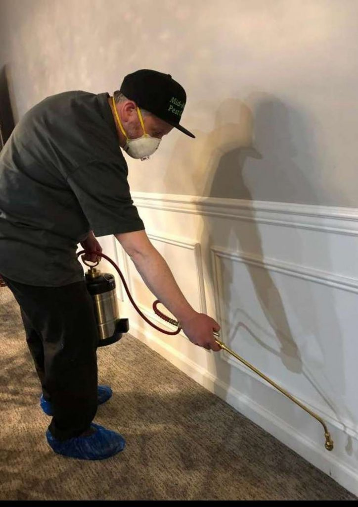 bed bug exterminator lakewood nj